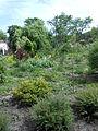 Ботанічний сад ДНУ 52.JPG