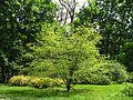 Ботанічний сад ім. І.Фоміна IMG 7405.jpg