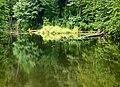 Верхнє озеро-ставок з Китаївського каскаду, тиха заводь (3).JPG