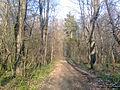 Весна в парке с. Гагарино.jpg