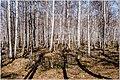 Весна на Южном Урале. - panoramio (2).jpg