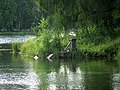 Гатчинский парк. Паромная пристань03.jpg