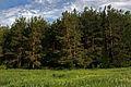 Дементьево - panoramio.jpg