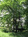 Дендрологічний парк 19.jpg