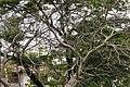 Доминиканская Республика - panoramio (13).jpg