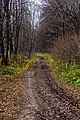 Дорога осенью - panoramio.jpg
