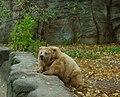 Киевский зоопарк (41).jpg