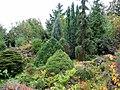 Коллекция мха. Фото Виктора Белоусова. - panoramio.jpg