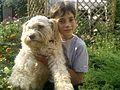 Лабрадудль с ребёнком.jpg