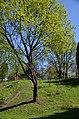 Молодіжний парк-пам'ятка садово-паркового мистецтва, Фастів 03.jpg