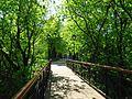 Парковий міст IMG 8700.jpg