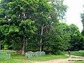 Парк в бывшем фольварке - panoramio.jpg
