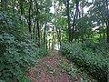 Полчаниновский приусадебный парк, тропинка.jpg