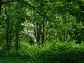 Приоратский парк возле Кордегардии.jpg