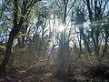 Пролет в ПП Златни пясъци 4.jpg