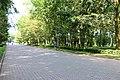 Тернопіль, Алея Героїв, Старий Парк.jpg