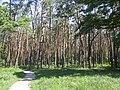 Украина, Киев - Голосеевский лес 130.jpg