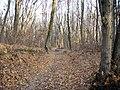 Украина, Киев - Голосеевский лес 227.JPG