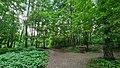 Урочище Лесные Сараи - многообразие путей.jpg