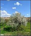 منظره ای از بهار - panoramio.jpg