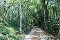 লাউয়াছড়া জাতীয় উদ্যান 11.jpg