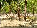 সুন্দরবন পূর্ব অভয়ান্যের প্রধান কেন্দ্র কটকা.jpg