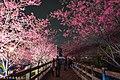 【台中。泰安景點】泰安櫻花季 (32302167814).jpg