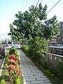 保順里公園步道20100223.JPG