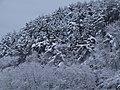 冬のますがた - panoramio.jpg