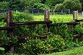 台大農場 - panoramio.jpg