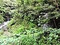 惠州博罗红花嶂越野穿越-大救援20140524-25 - panoramio (2).jpg