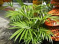 0998Ornamental plants in the Philippines 63.jpg