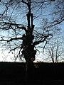 107 Lindenallee Ladendorf Winter Alte Hexe.jpg
