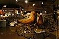 130727 Rishiri Town Museum Rishiri Island Hokkaido Japan 11s3.jpg