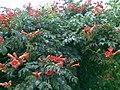 13082011(005)Kherson flowers.jpg