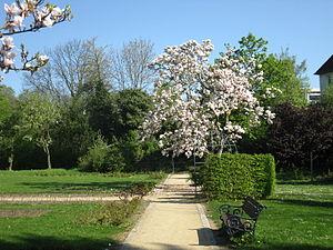 Magdalenengarten - Image: 20.4.09.Magnolie