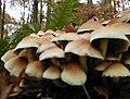 20021102 Helden Bovenbos paddenstoelen 02 (9929011406).jpg