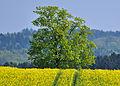 2011-04-17 14-15-09 Switzerland Kanton Schaffhausen Gennersbrunn.jpg
