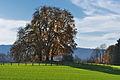 2011-11-06 13-49-34 Switzerland Kanton Thurgau Dörflingen, Laag.jpg