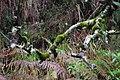 2012-10-27 12-23-50 Pentax JH (49283735746).jpg