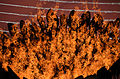 2012 Olympic Cauldron Flames.jpg