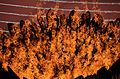 2012 Olympic Cauldron Flames.jpg