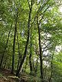 20141026Habsterwiesen Saarbruecken07.jpg