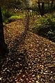 2016-11-25 Yashiro forest park,やしろの森公園 落ち葉の道 DSCF6004☆彡.jpg