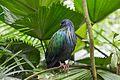 2016 Singapur, Jurong Bird Park (046).jpg