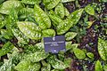 2016 Singapur, Ogrody botaniczne (111).jpg