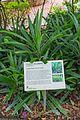 2016 Singapur, Ogrody botaniczne (130).jpg