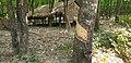 20200208 105427 Rubber plantation Bago Division, Myanmar anagoria.jpg