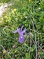 2 - תמונה מבית העלמין הקראי בתקופת האביב בו פורחים מגוון פרחים.jpg