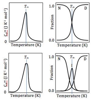 Differential scanning calorimetry - Normalized DSC curves using the baseline as the reference (left), and fractions of each conformational state (y) existing at each temperature (right), for two-state (top), and three-state (bottom) proteins. Note the minuscule broadening in the peak of the three-state protein's DSC curve, which may or may not appear statistically significant to the naked eye.